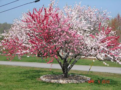 http://3.bp.blogspot.com/_ZzNIw3ADWQo/S7ykGR_zePI/AAAAAAAAAMY/jq46WewHE-0/s1600/Peach+5+in+1.JPG