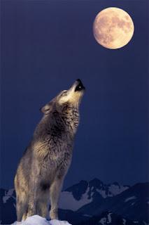 ladrar a la luna refran