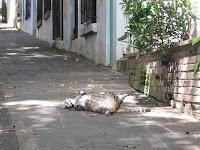 Feral Cat in San Juan, PR
