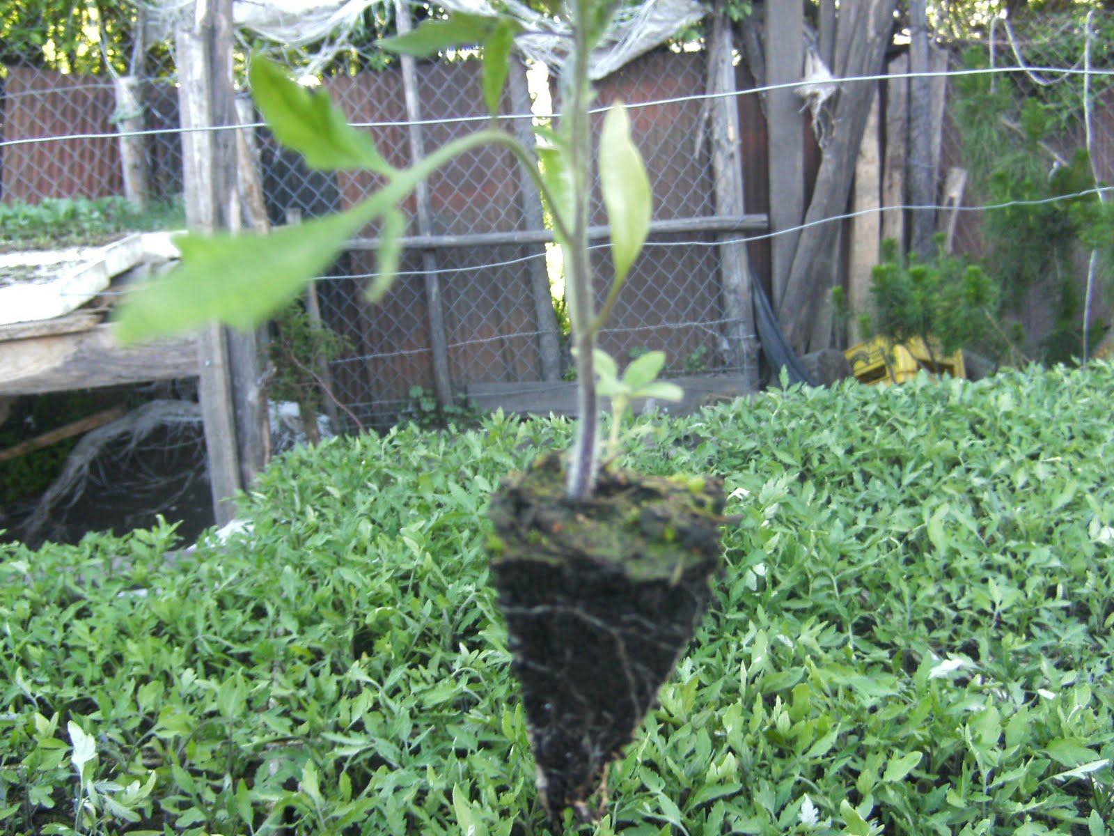 Vivero forestal y agricola san matias forestal y hortaliza for Proyecto productivo de vivero forestal