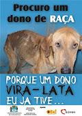 Campanha contra abandono de cães!!