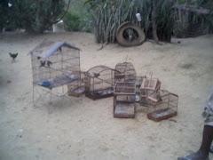 Animais em Cativeiro.