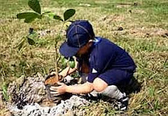 Mil árvores são plantadas na margem do Rio Paraíba do Sul