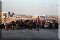 Pastor de cabras