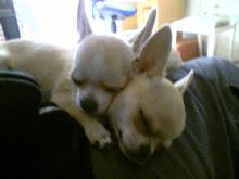mis bebés