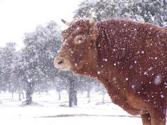 A este blog le gusta el frio invernal