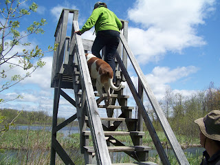 Climbing to the top of the lookout tower