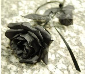 Chalé de Perséfone Rosa_negra
