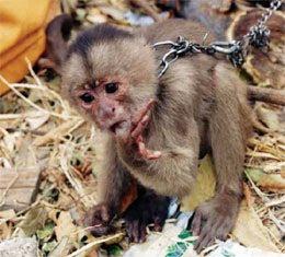 imagenes de animales monos - Los 24 animales más monos y divertidos sacando la lengua