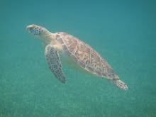 The HIGHLIGHT of my snorkeling trips!
