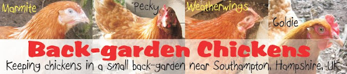 Back Garden Chickens