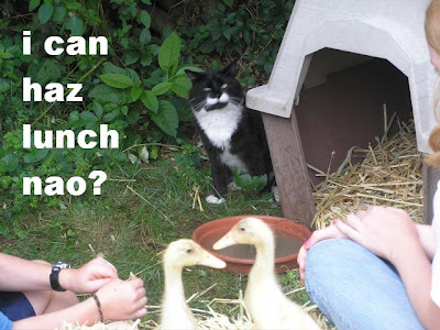 funny cat picture - funny cat pictures-ol-cat-lunch