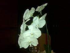 Adoro las orquídeas