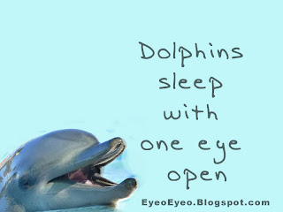 Dolphin sleeps with one eye open