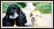 Murphy & Bailey