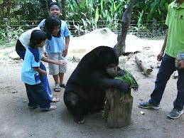 kuala gandah sanctuary