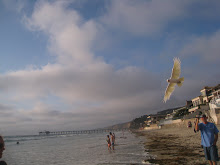 Birds flying at beach! Hit picture see for yourself!
