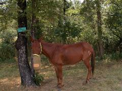 My mule