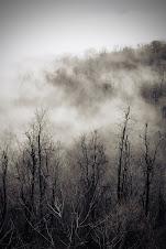 Alec's Fog