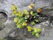 Plante au pied d'un arbre - photo et fond d'écran gratuit plante au pied un arbre