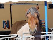Cheval de cirque - image gratuite. Publié par Vautour à 14:29 Aucun . cheval