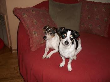 Terrier Rescues