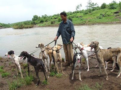 prasad raghu mayekar in other words the godfather of caravan hounds or