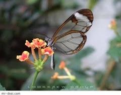 ธรรมชาติอันงดงาม