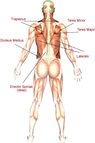 Easy Muscle Building Tips: Build Your Back Muscles