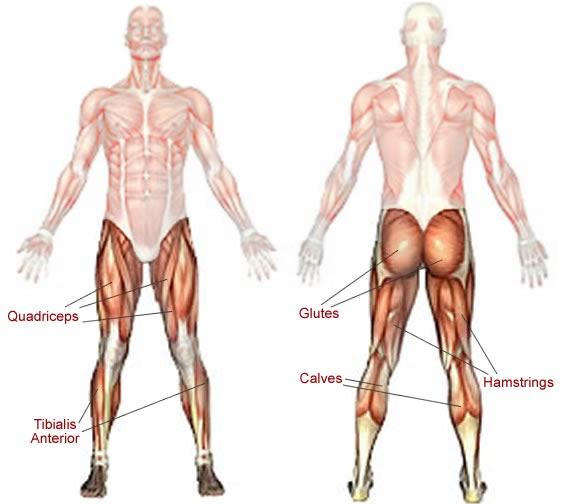Easy Muscle Building Tips Get Strong Legs