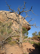 Tree in Bridges National Monument
