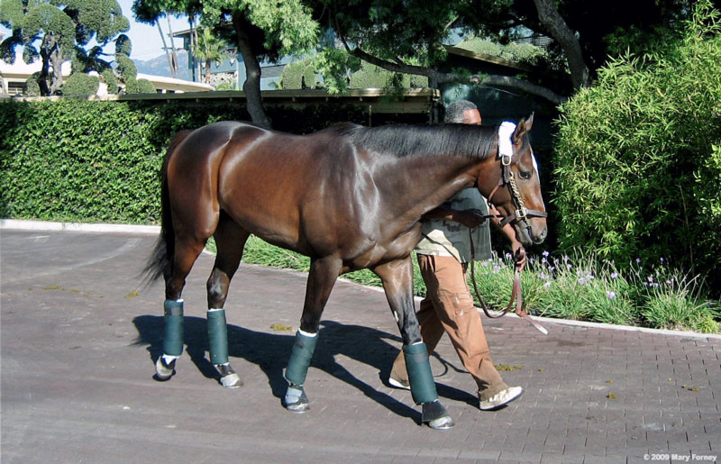 Wayman at Santa Anita