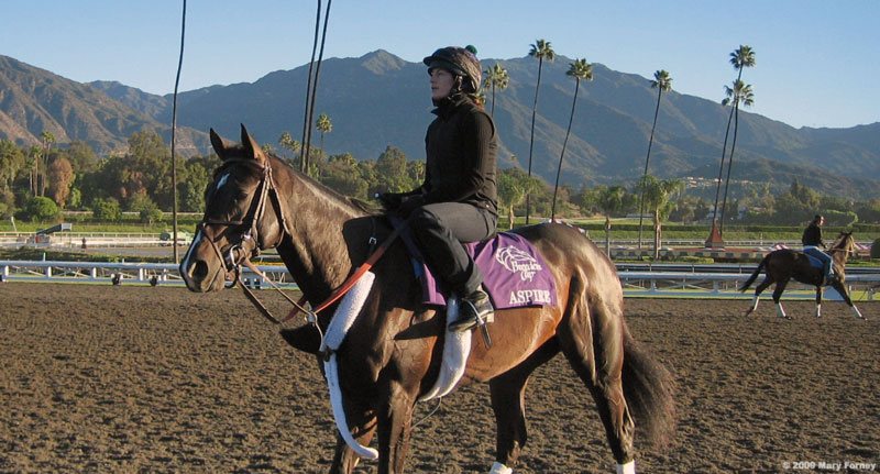 Aspire preps for Breeders' Cup