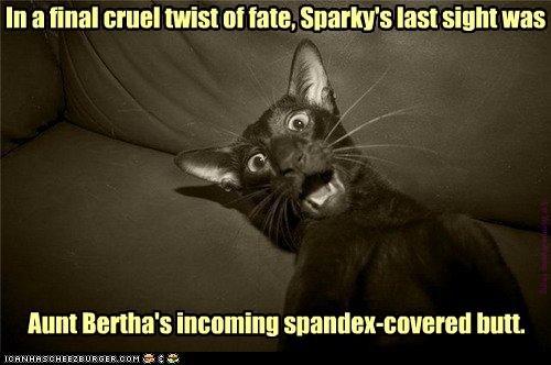 [Sparky]