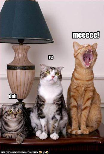funny-pictures-cats-sing-musical-notes.j