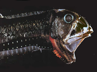 The Deep Sea Viperfish