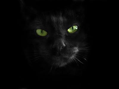 Почему мы боимся черных котов