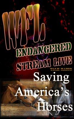 [Saving+AmericasHorsesBNR_250x400.jpg ]