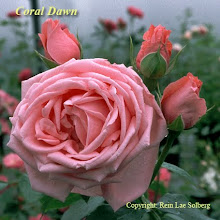 Coral Dawn