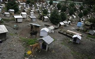 Kampung Unik untuk Anjing Liar di Brazil