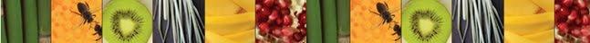 Aromafloria, Wellness in Bloom