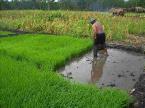 Karangan Perbincangan  Peranan Pelbagai Pihak Dalam Memajukan Industri Pertanian Negara