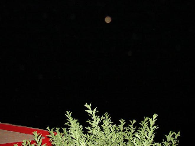 Ultimos Avistamientos Ovni ET 24/enero/2010 sec