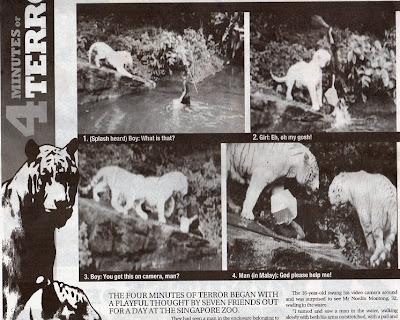 harimau jadian lelaki melayu di baham harimau singapura zoo