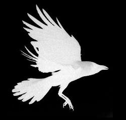 Crow's Nest Magazine