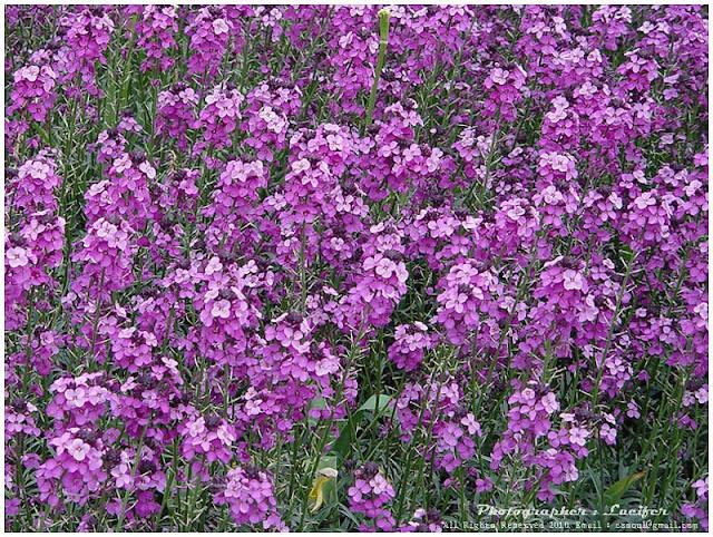 Camera Photograph Flower violet