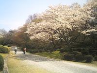 桜を楽しむウォーカーたち
