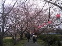 岩崎川桜並木