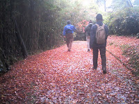 敷き詰められた紅葉を歩く