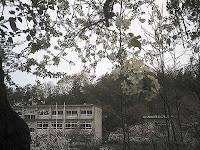 マメナシの木から見た水南小学校